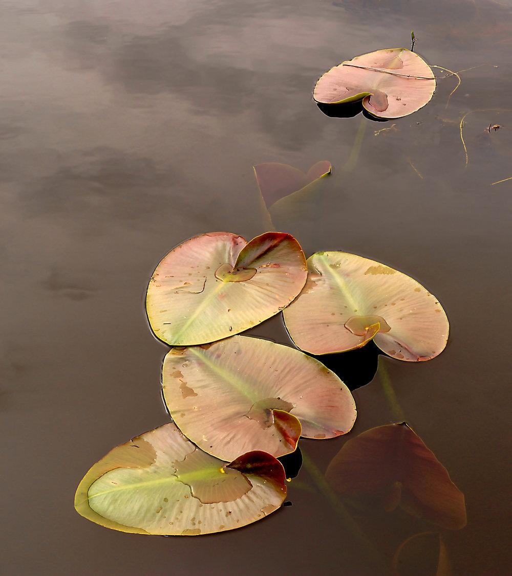 Lilies25X28.jpg