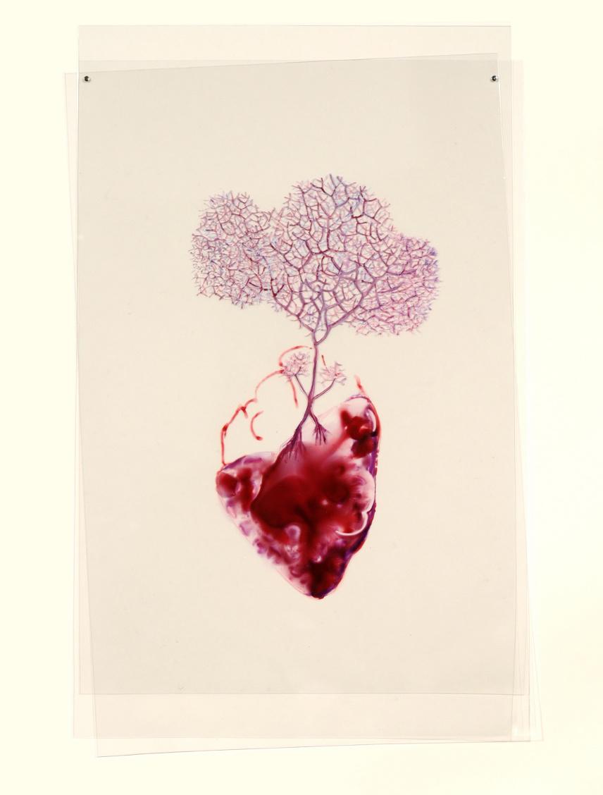 Heart Series 2.jpg