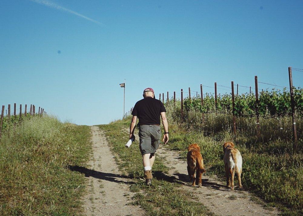 Daniel & the Pups