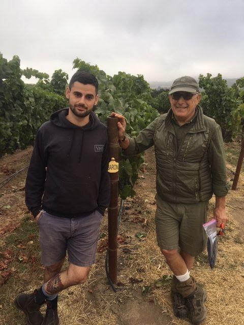 Sam & Daniel Baron, Soberanes Vineyard