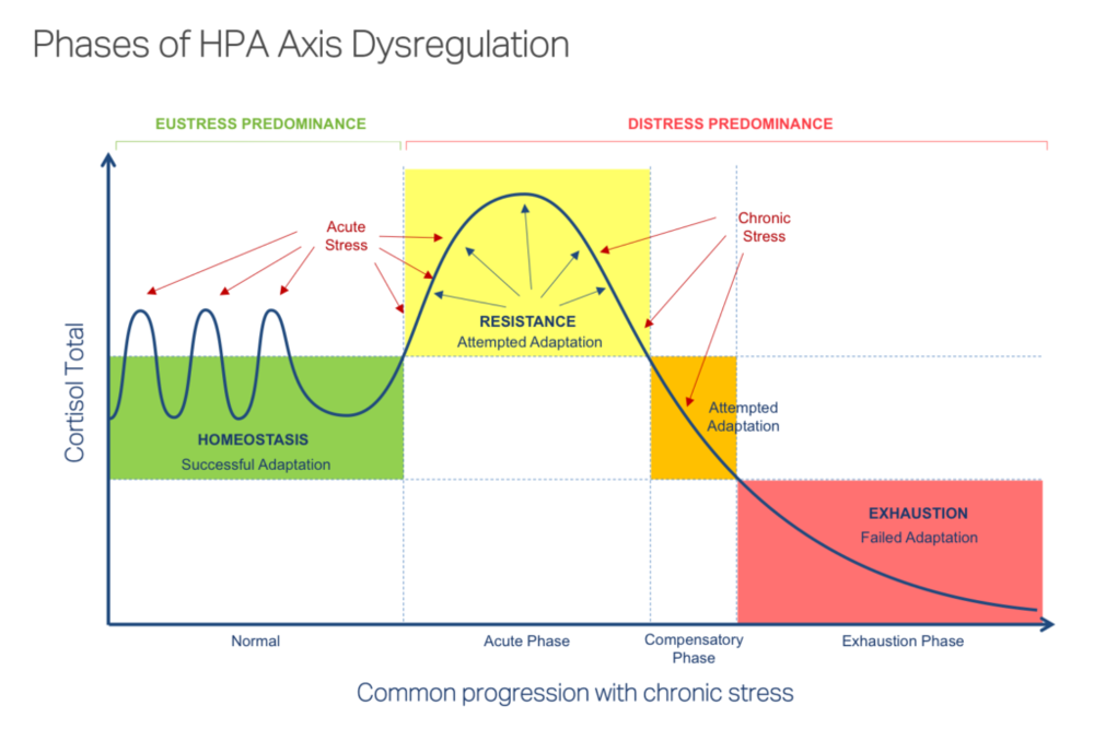 HPA Axis Dysregulation Phases Adrenal Stress