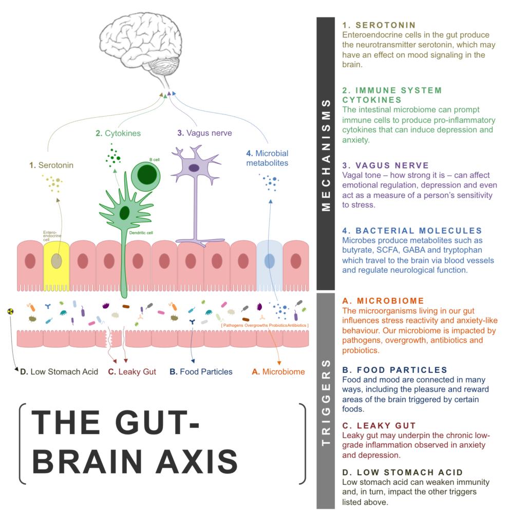 Gut Brain Axis Depression Anxiety