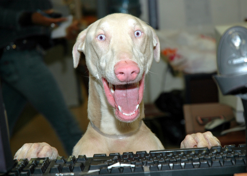 smiling dog at computer