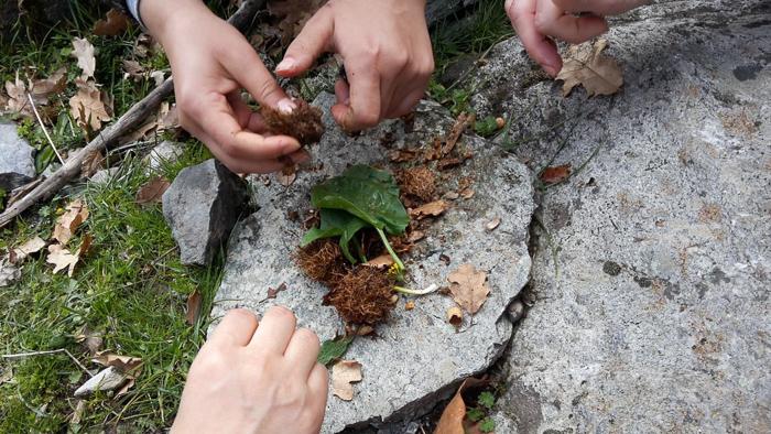forest_kindergarten-2.jpg