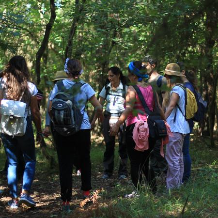 forest-0486.jpg
