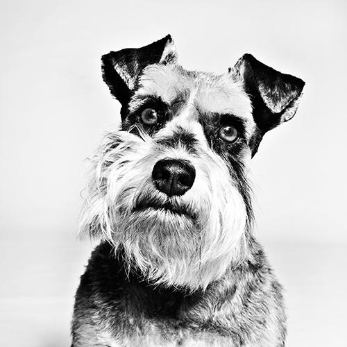 Pet Portrait Photography.jpg
