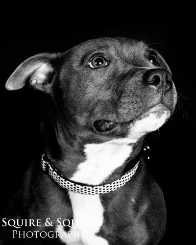 Studio-Pet-Photography02.jpg