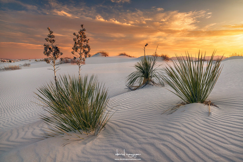 White sands - Southern New MexicoImage by Davide Nguyen @ www.davidnguyenphotos.com