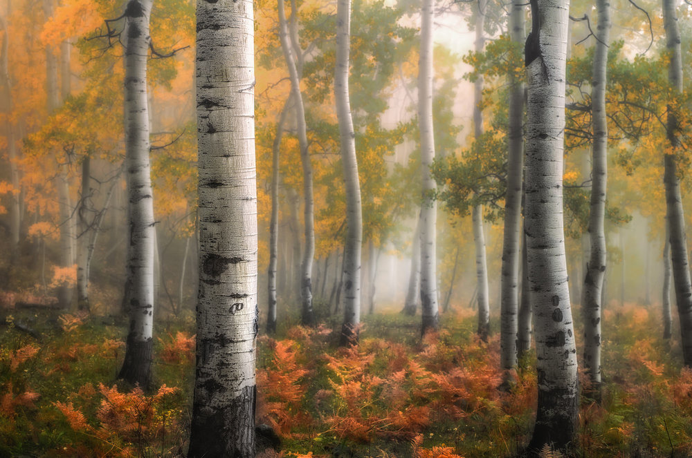 Enchanted Forest - Near Ridgway, CO