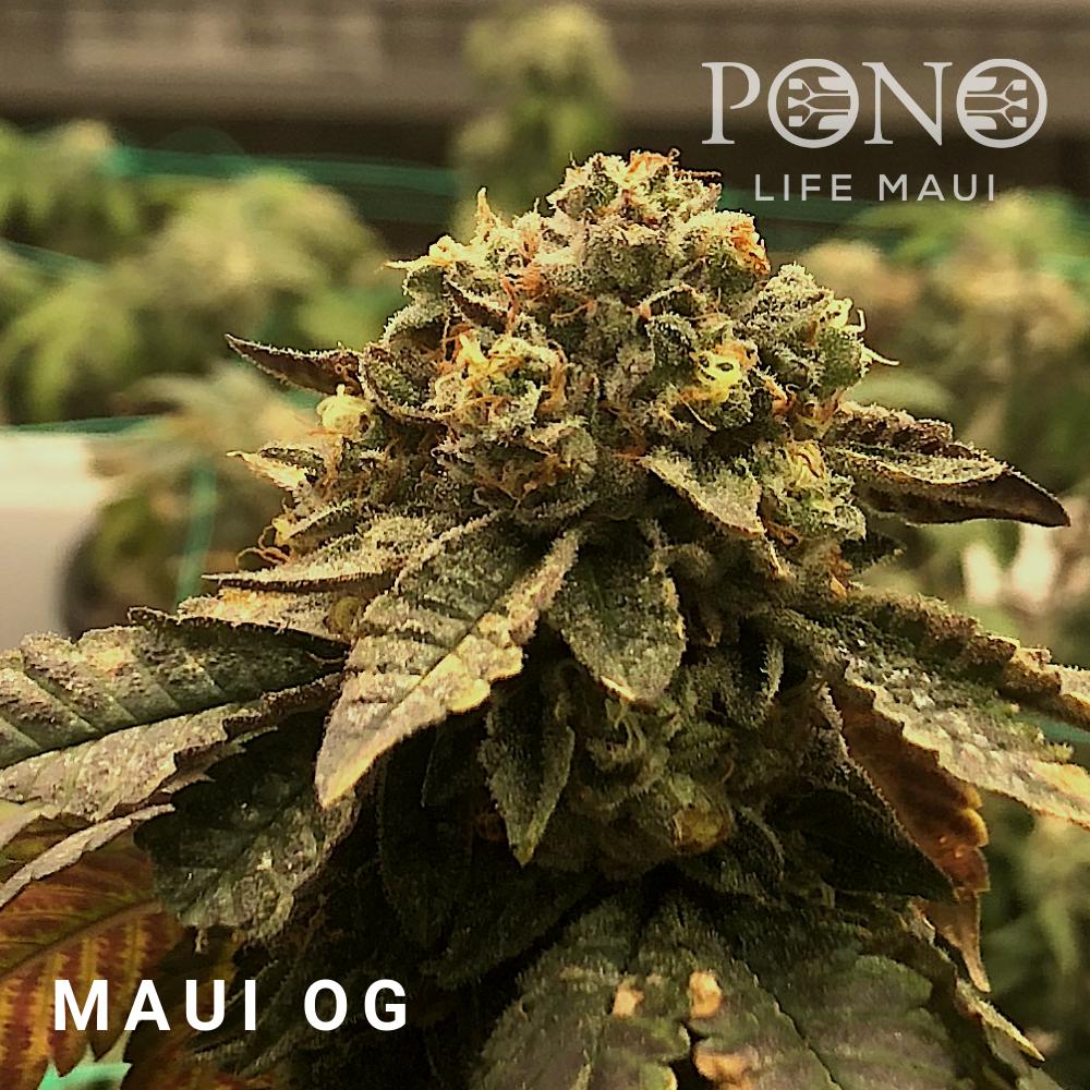 181215 Menu Maui OG.png