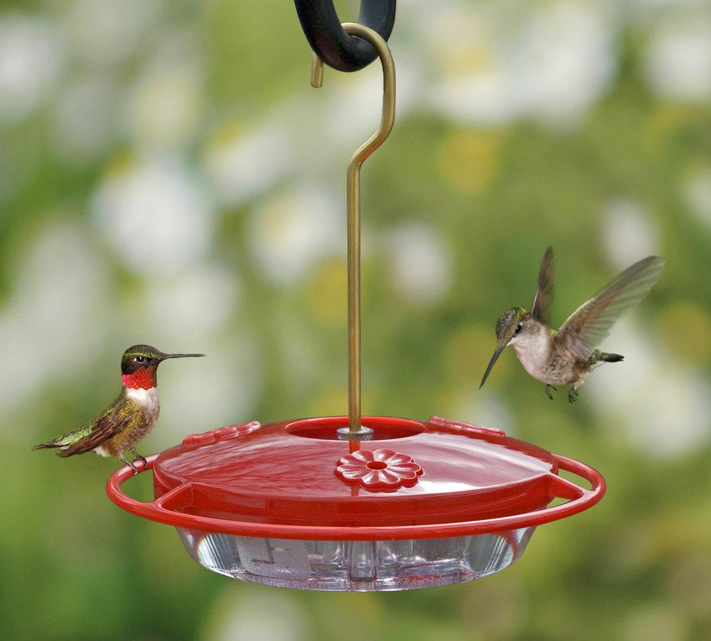 hummingbirds on plastic feeder.jpg