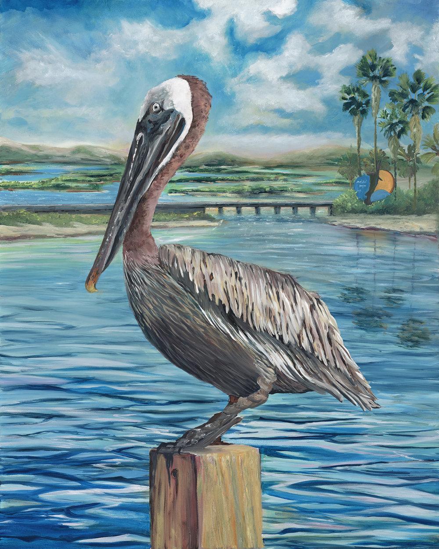 Brown Pelicanfor web.jpg