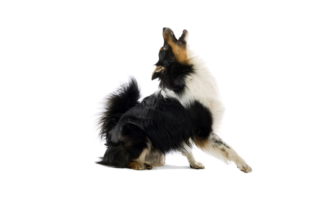 reactive-dog-training-piedmont-triad-NC