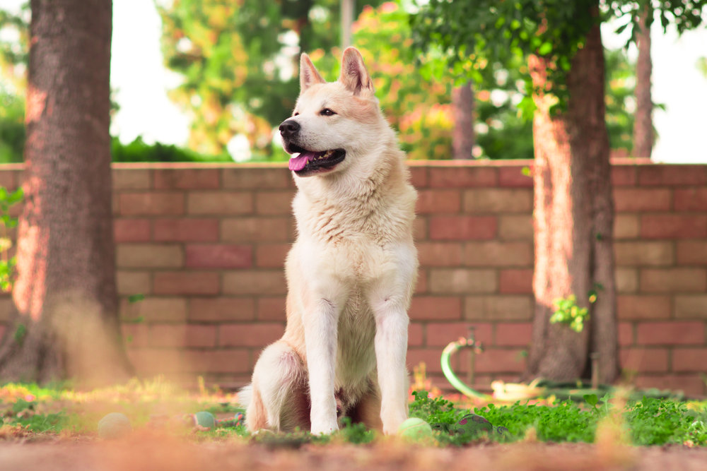 best-dog-training-piedmont-triad-nc