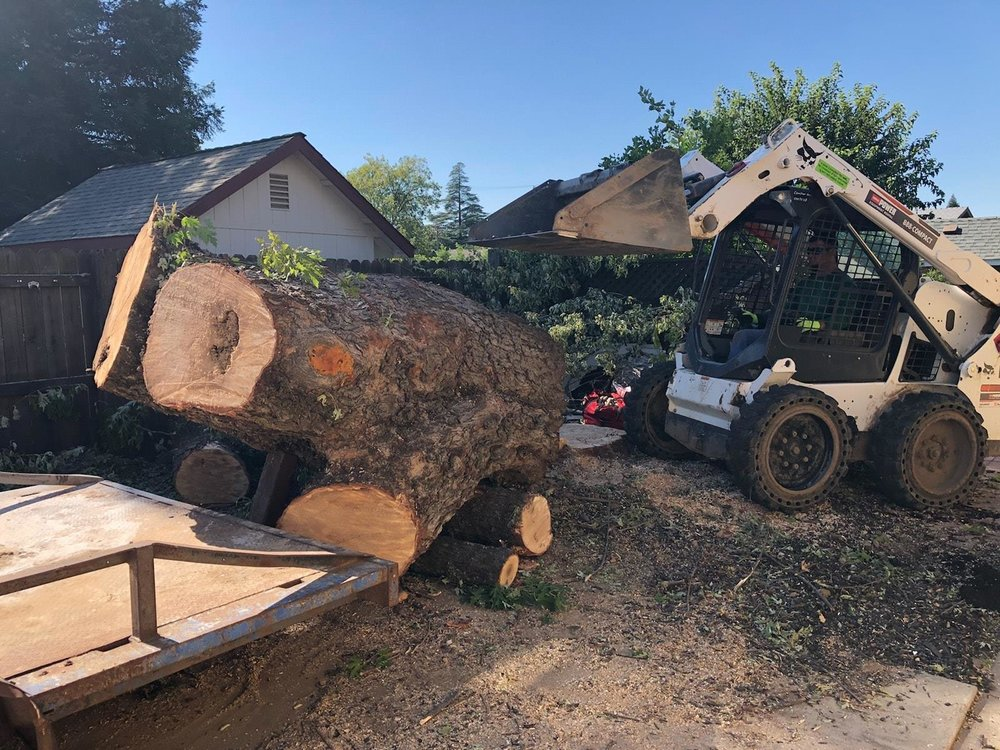 tree_stump_removal.jpg