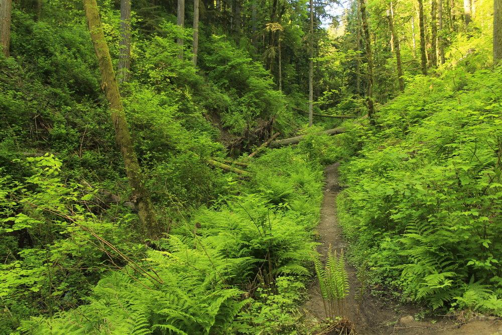 Hike 4: Newton Road