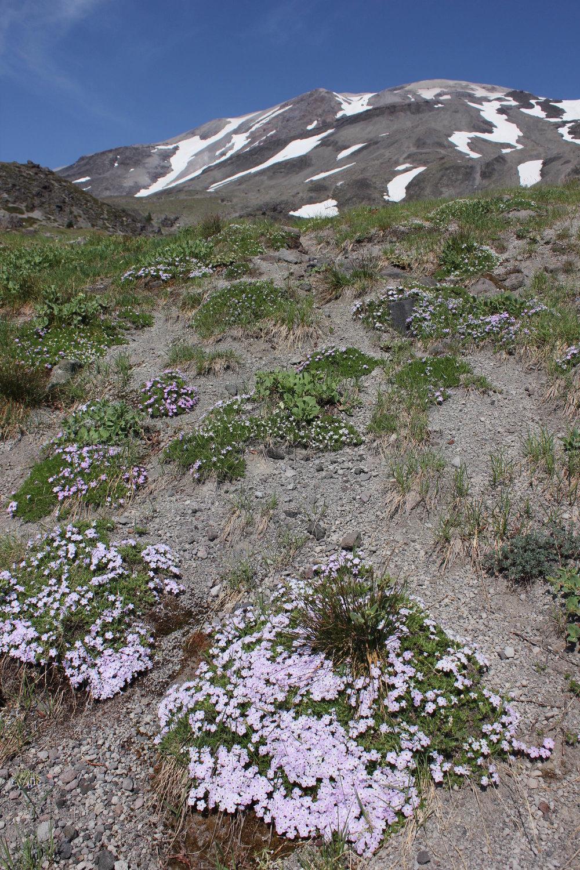 Hike 12: Butte Camp