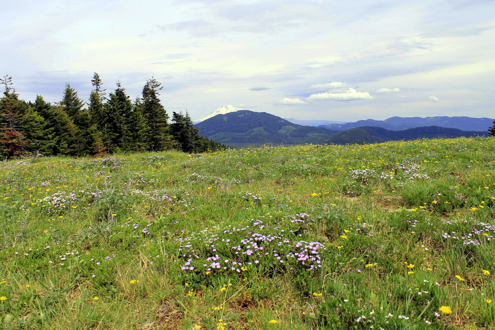 Hike 21: Grassy Knoll