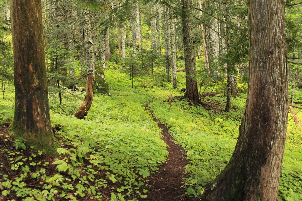 Hike 26: Horseshoe Ridge