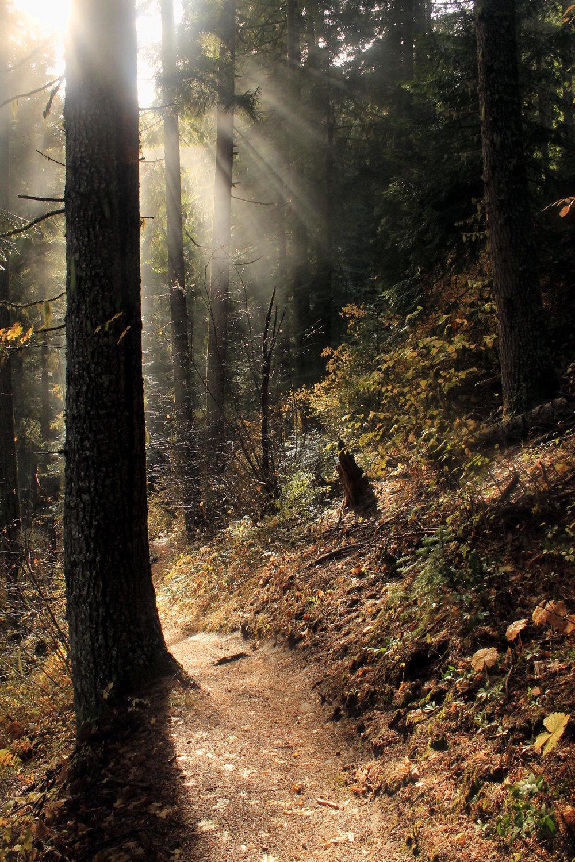 Hike 30: Dog River Trail