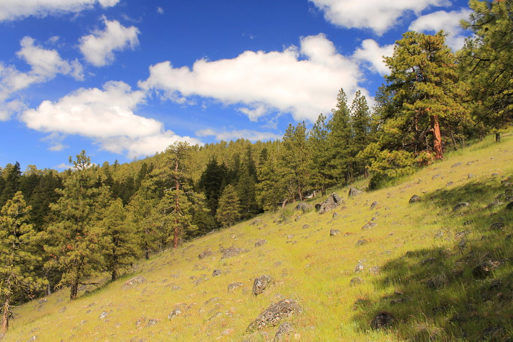 Hike 32: Underhill Trail