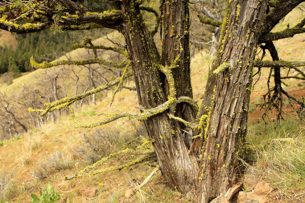 Hike 35: Tygh Creek