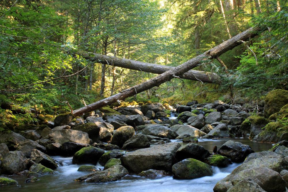 Hike 41: Whetstone Mountain