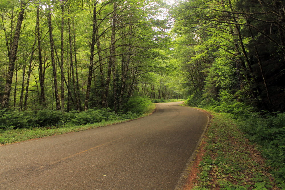The Nestucca River Road