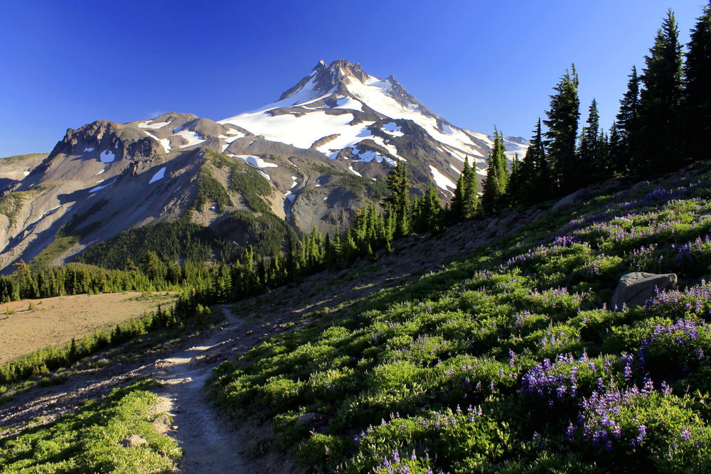 Following the Pacific Crest Trail downhill to Jefferson Park.