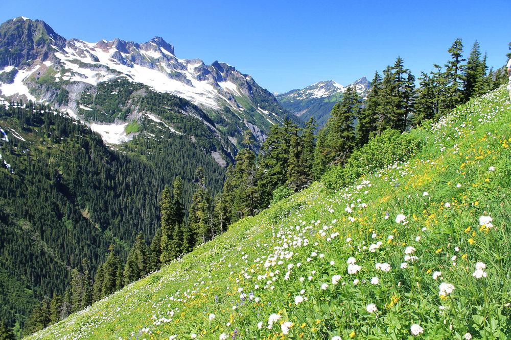 Hannegan Peak meadows, North Cascades National Park