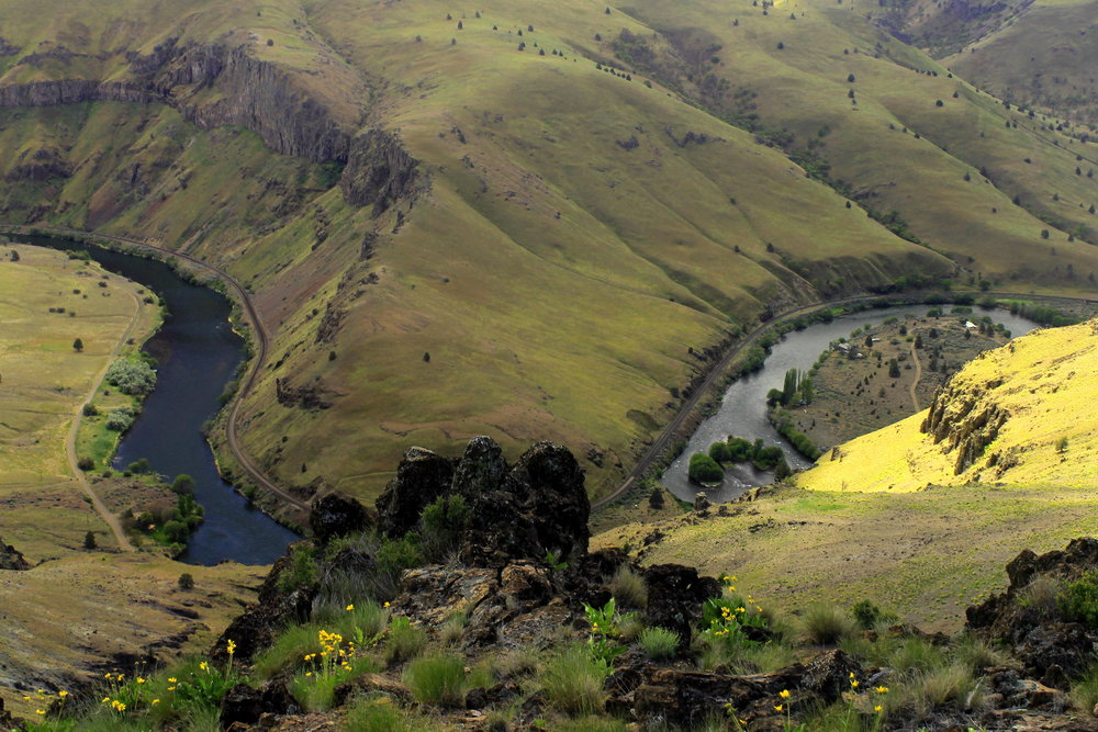 The Deschutes River snakes through a deep canyon south of Maupin, below the tract of land known as Criterion Ranch. This area burned in fire during the summer of 2018, so expect a blackened landscape for the next few years while the grasses and flowers reseed.
