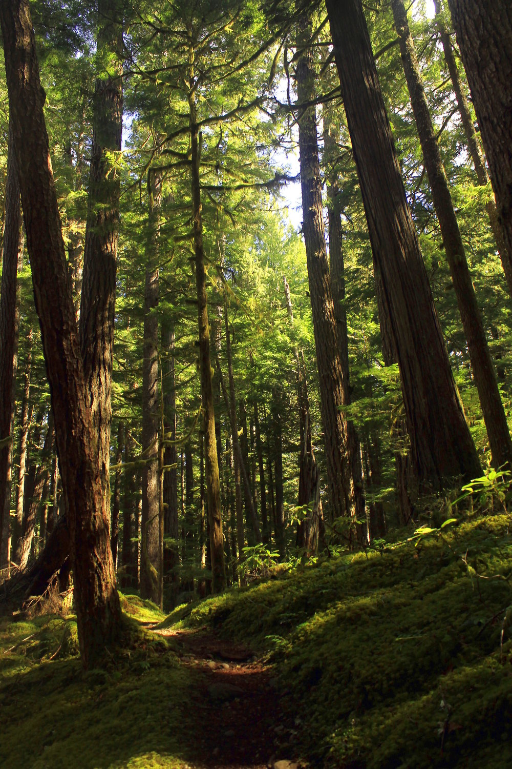 The lush greens and ancient forest along the upper Clackamas River are always welcome on a warm day in May.