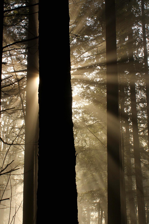 Sun breaks through the fog at Mount Talbert on a cold December morning.