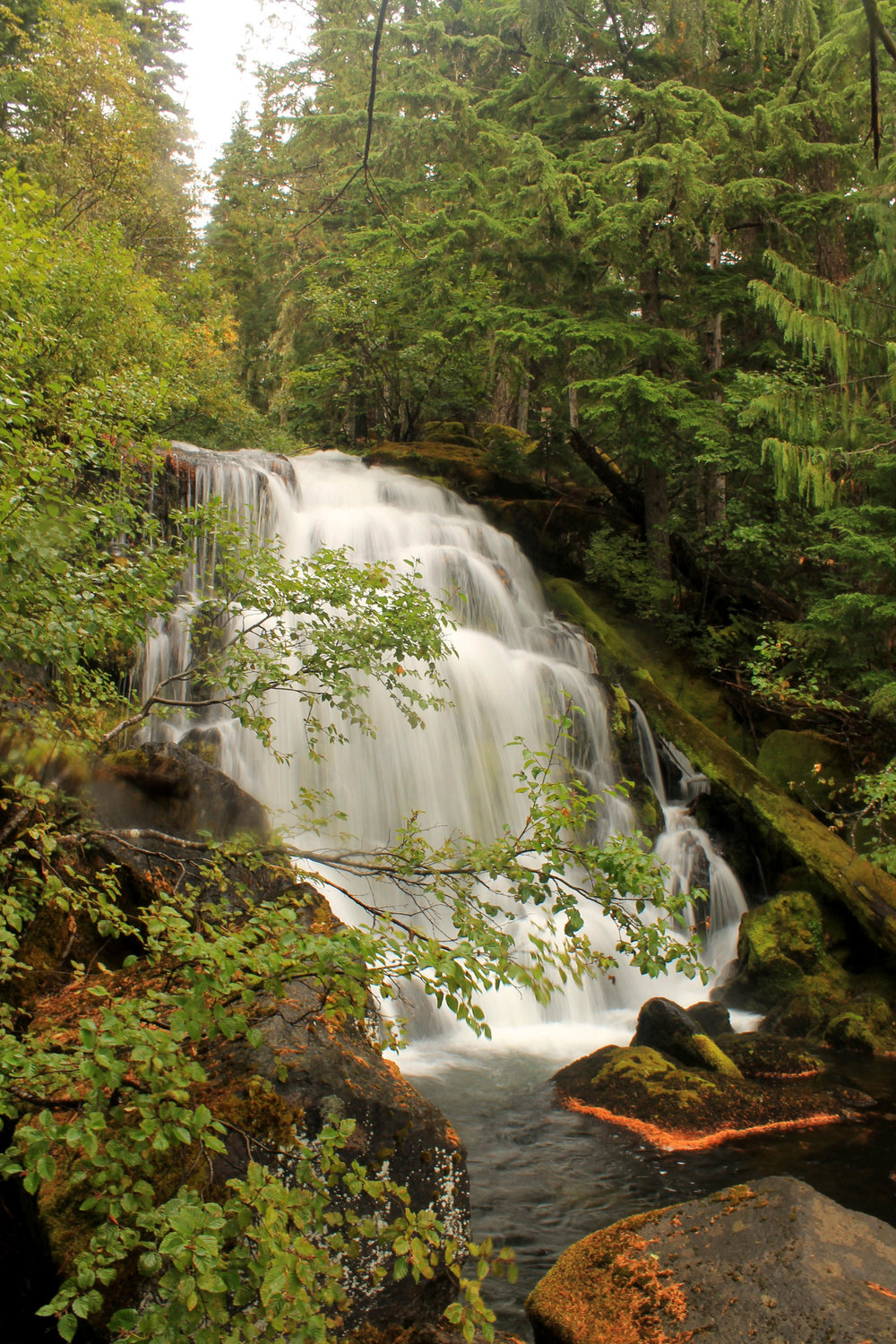 The first tier of Breitenbush Cascades, a multi-tiered waterfall on the North Fork of the North Fork of the Breitenbush River.