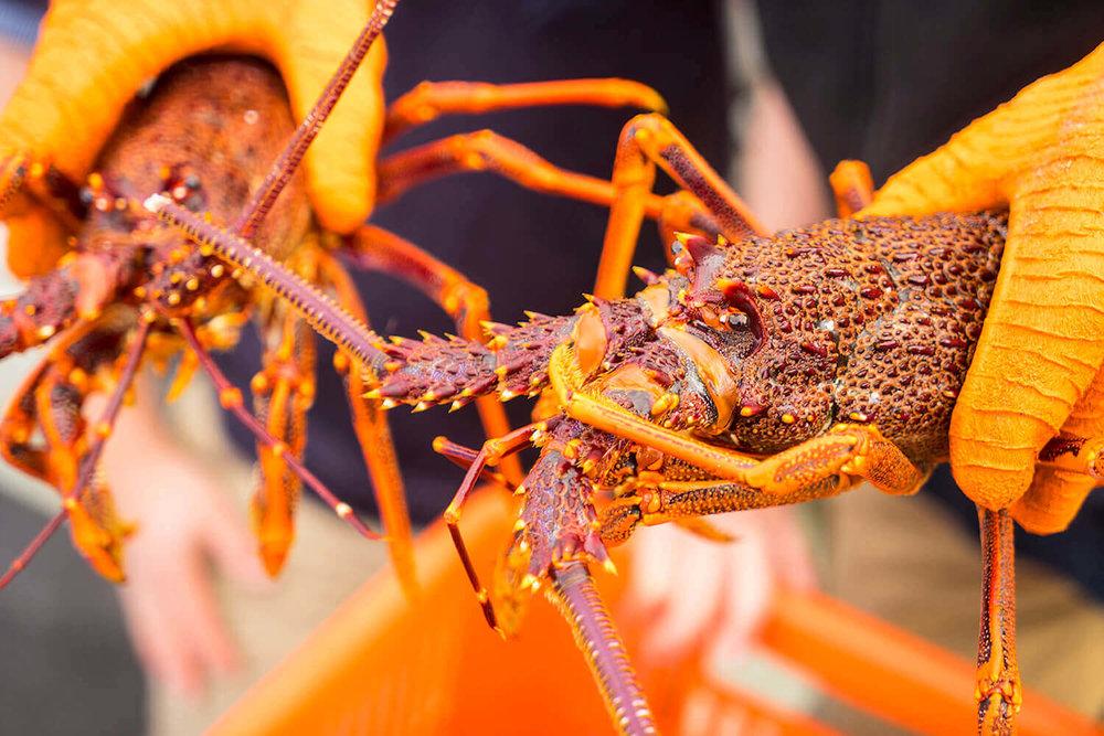 05+Close+up+of+Lobster.jpg