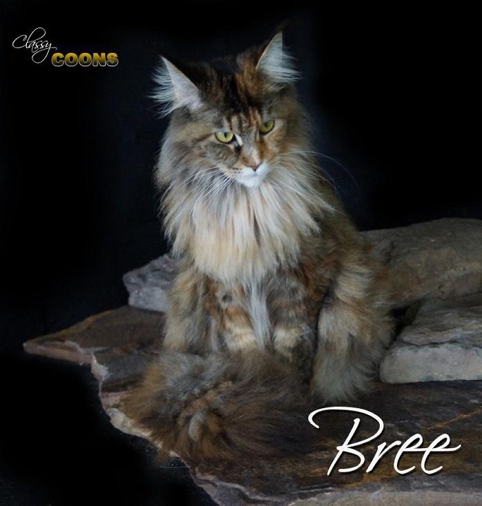 Bree3460.jpg