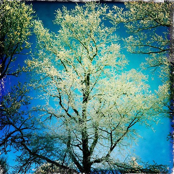 Wingst-Winter-4.jpg