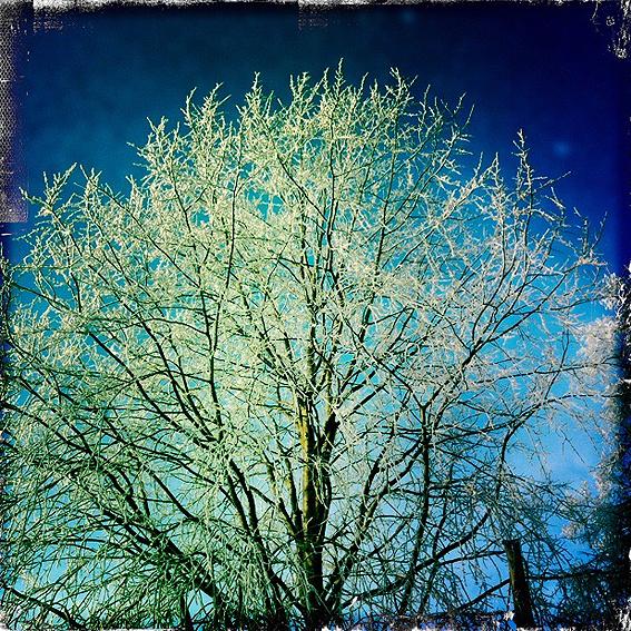 Wingst-Winter-6.jpg