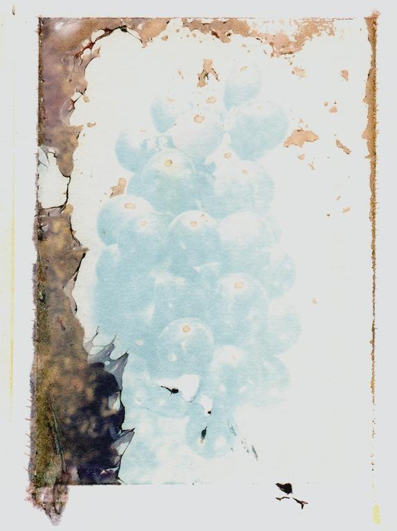 Trauben-Pola-3.jpg