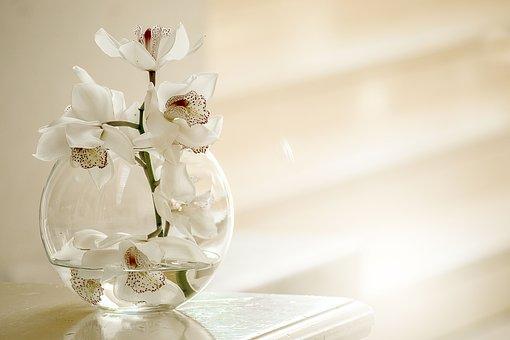 orchid-3178759__340.jpg