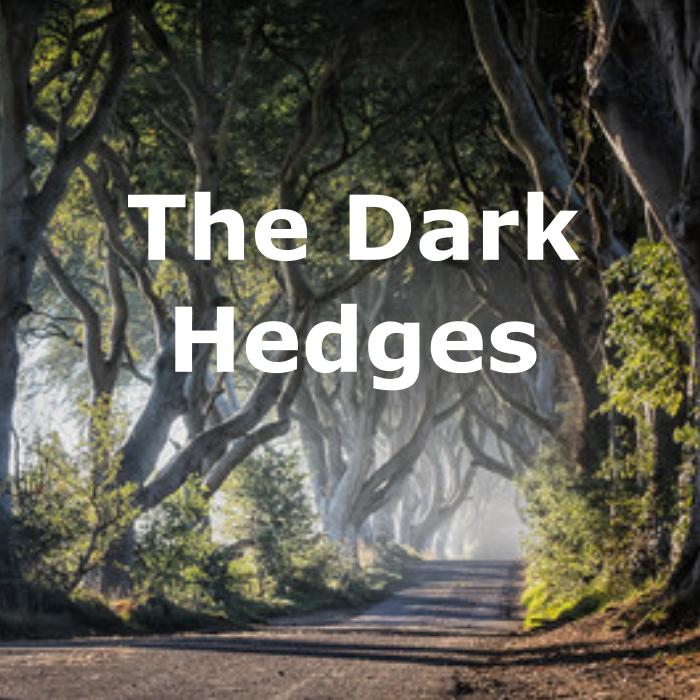 dark-hedges.png