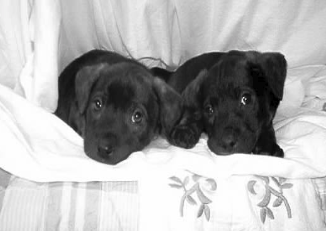 """First foster puppies - """"Meatball"""" and """"Chicken Bone"""" - 2005"""