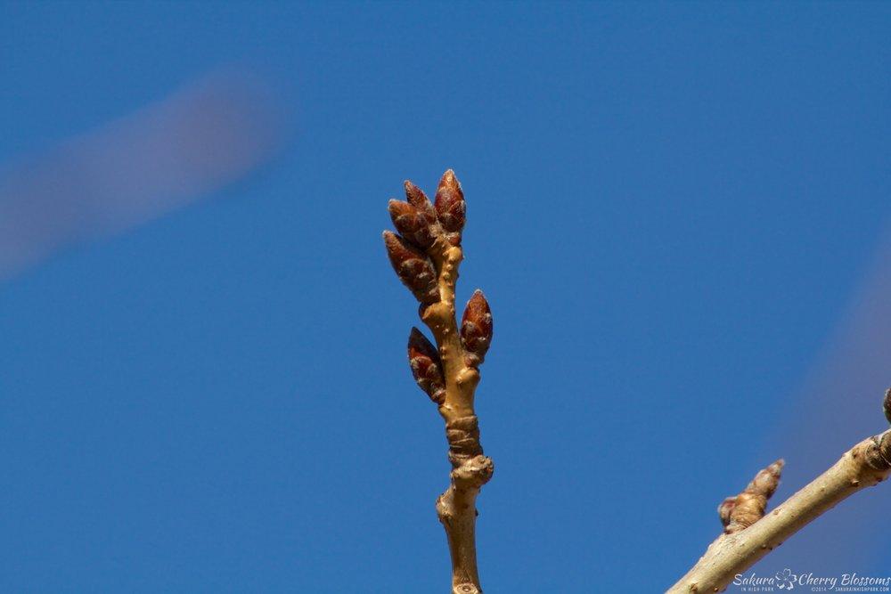 Sakura-HighPark-Apr62014-084.jpg