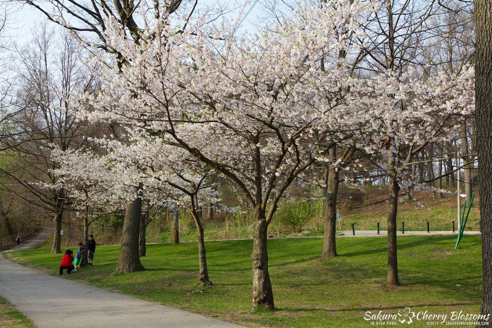 SakuraInHighPark-May1314-363.jpg