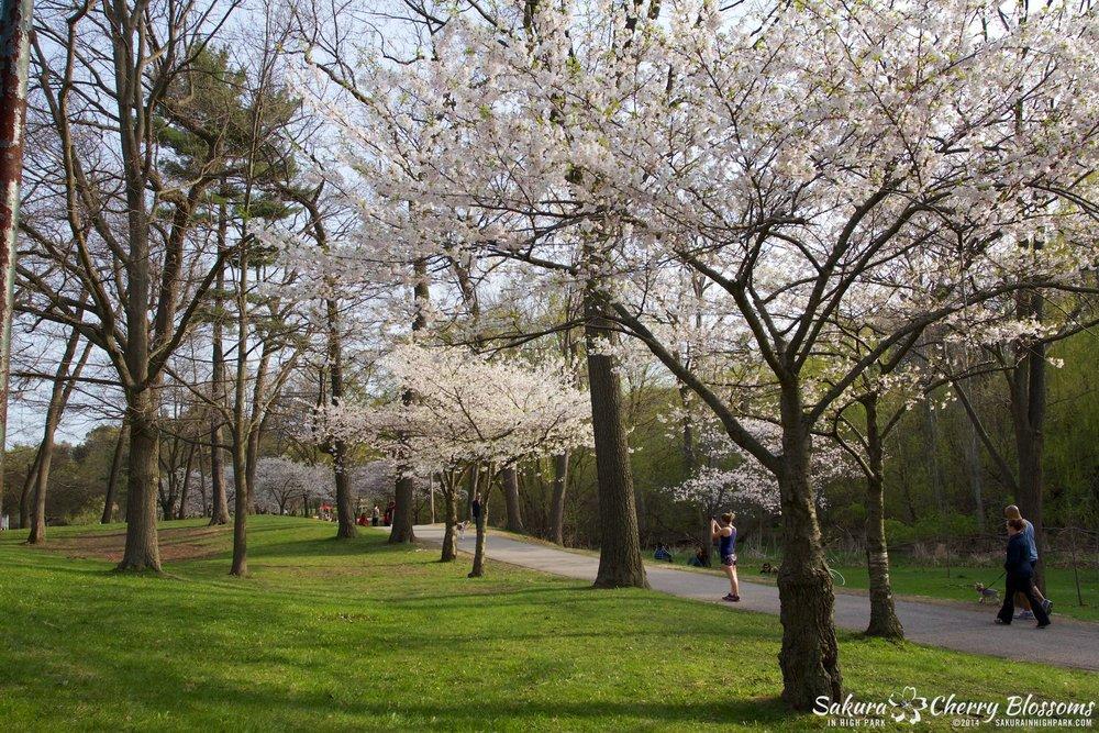 SakuraInHighPark-May1314-343.jpg