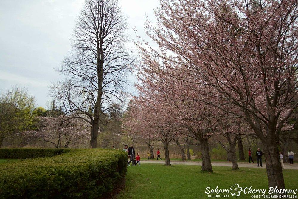 SakurainHighPark-May515-2055.jpg