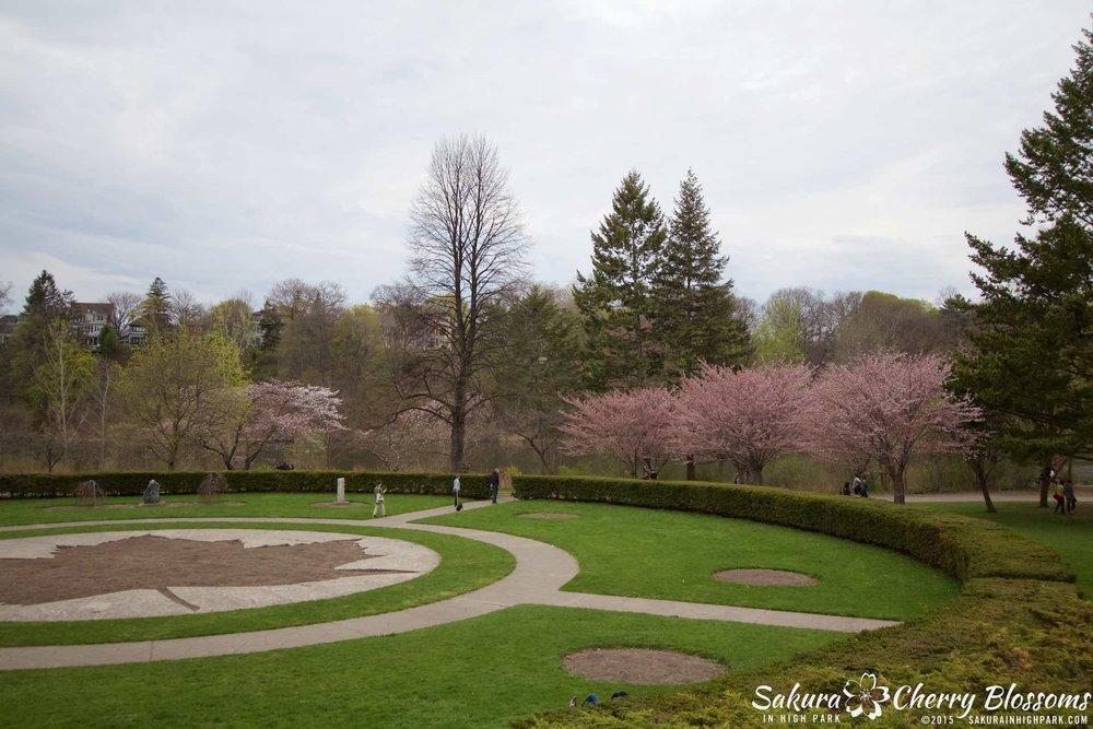 SakurainHighPark-May515-2054.jpg