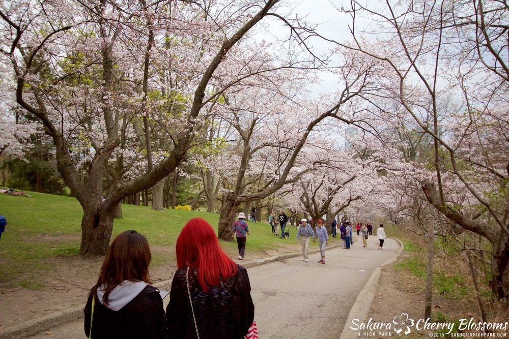 SakurainHighPark-May515-2088.jpg