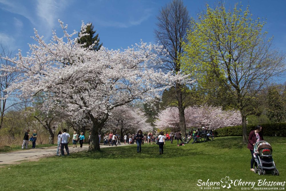 SakurainHighPark-May715-2021.jpg