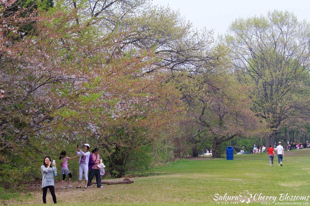 SakurainHighPark-May1015-2211.jpg